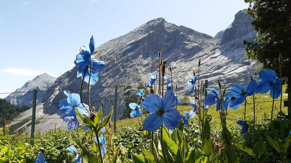 """Jede Menge verschiedene Blumen und Pflanzen am Wegesrand lassen die Pilger auf dem Hildegard-Weg die """"Grünkraft"""" der Natur spüren."""