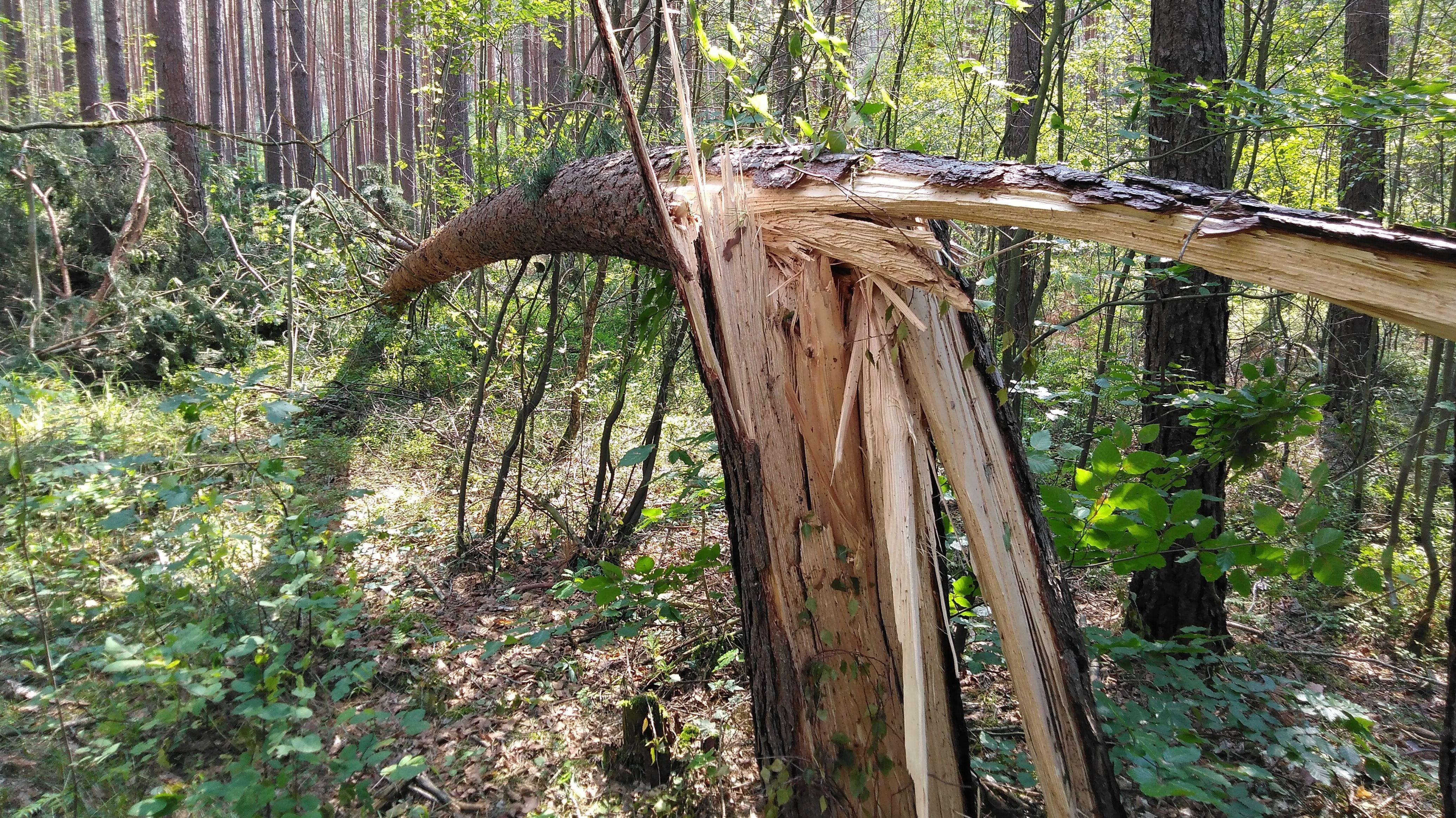 Beschädigter Baum im Landkreis Roth