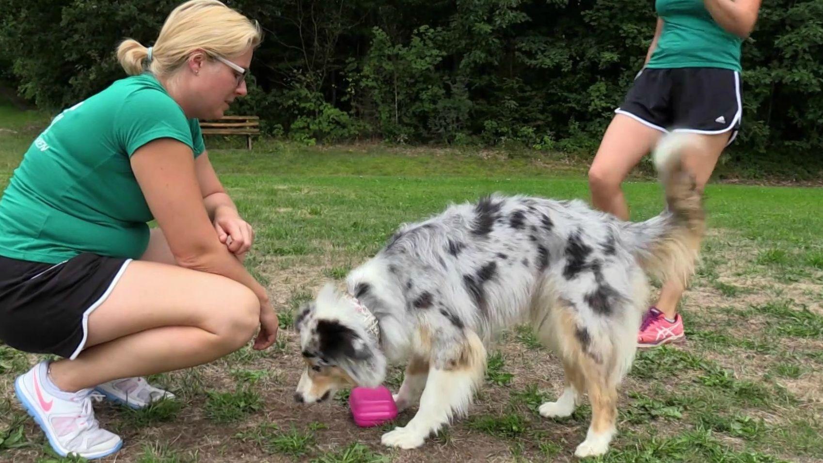 Flyball Hundestaffel aus Emtmannsberg