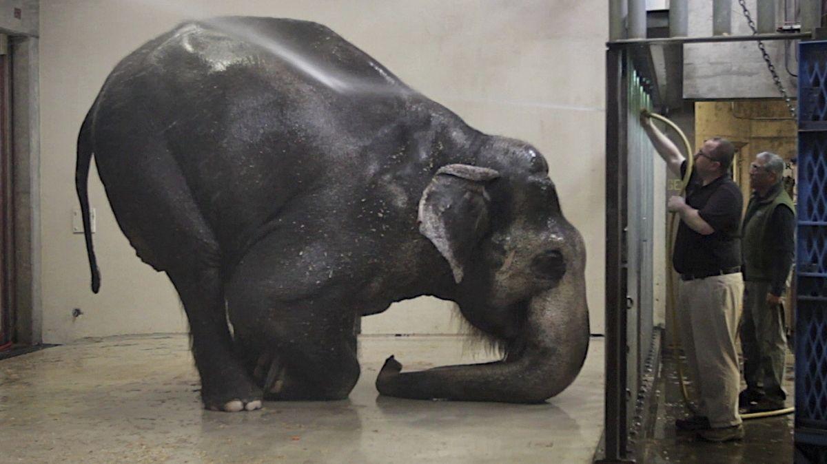 Ein Elefant verbeugt sich tief und hat 2/3 seines Rüssels auf dem Boden vor einer Tür, hinter der zwei Männer stehen,