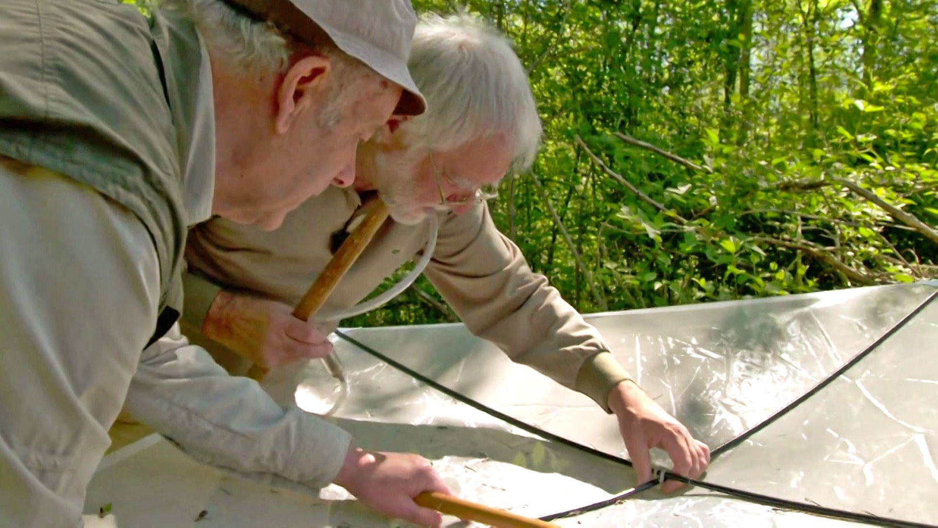 Unterwegs mit den Insektenkundlern Peter Brandl (links) und Hans Mühle (rechts).
