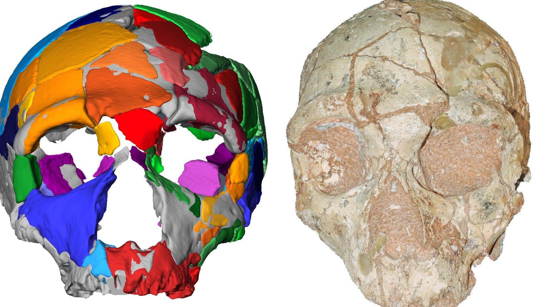 Das virtuelle Bild lässt auf einen Neandertaler schließen.