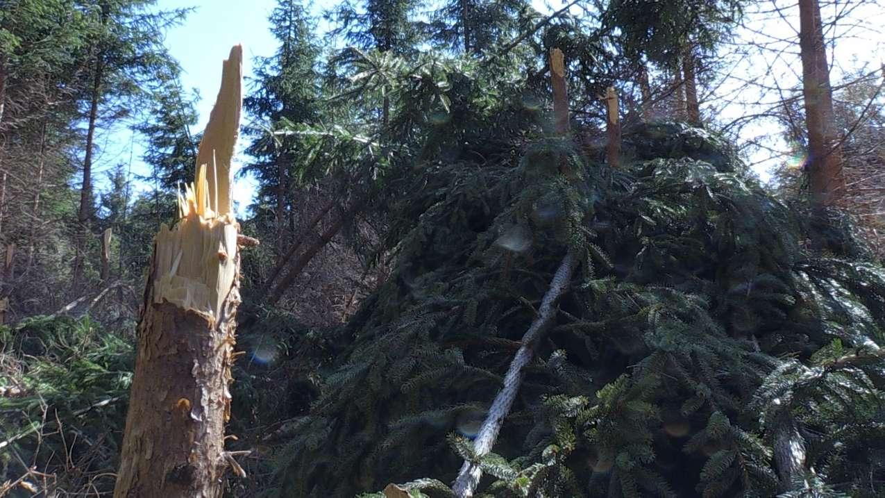 Abgebrochene Bäume im Wald