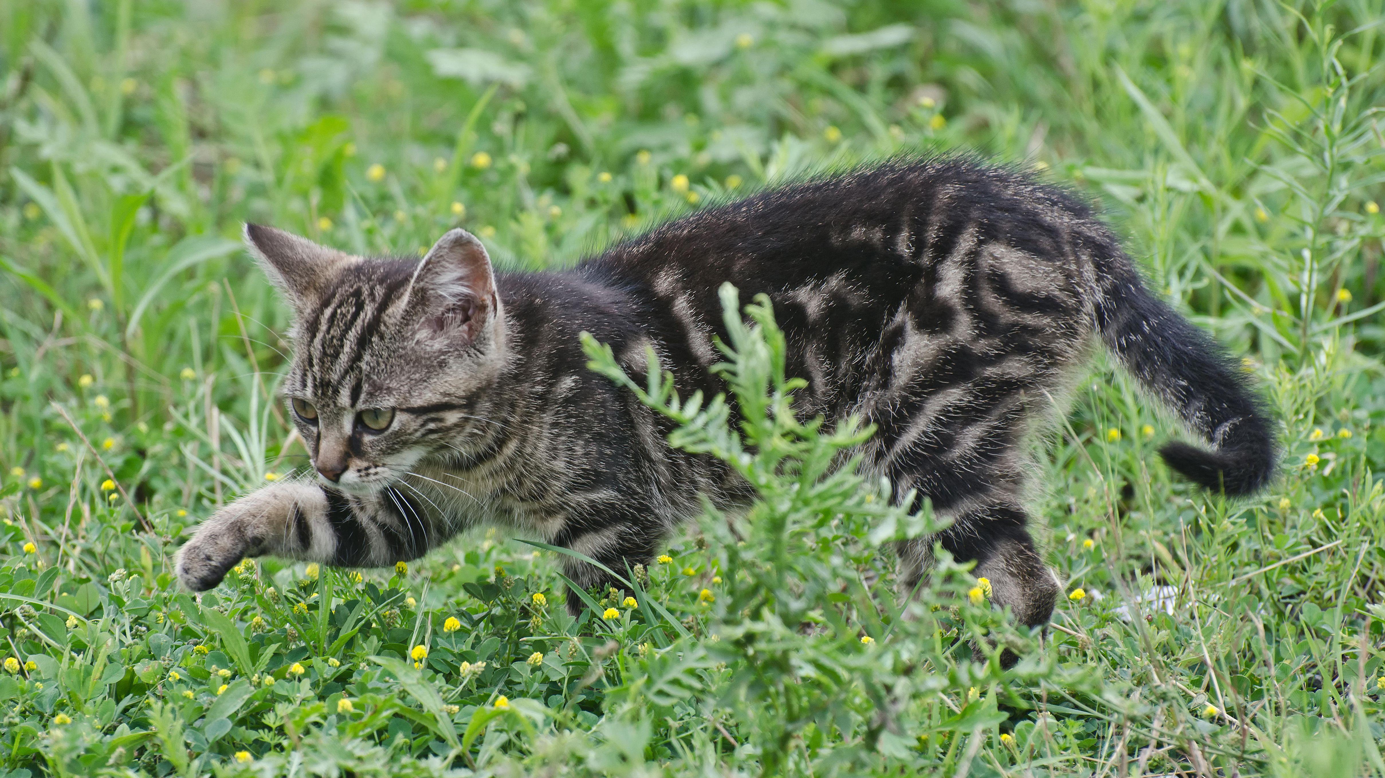 Eine Katze im Gras.