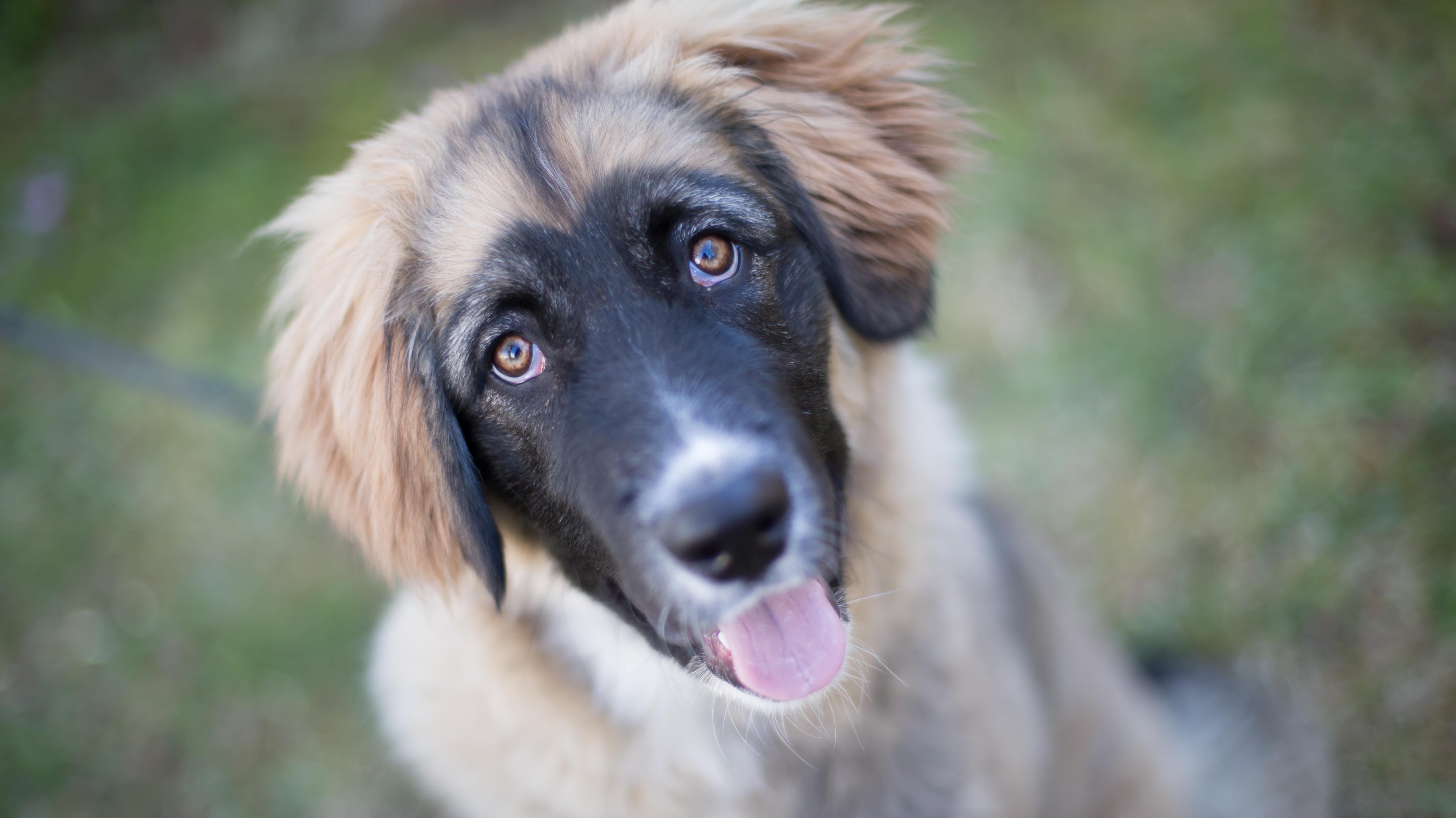 Archivbild Hund