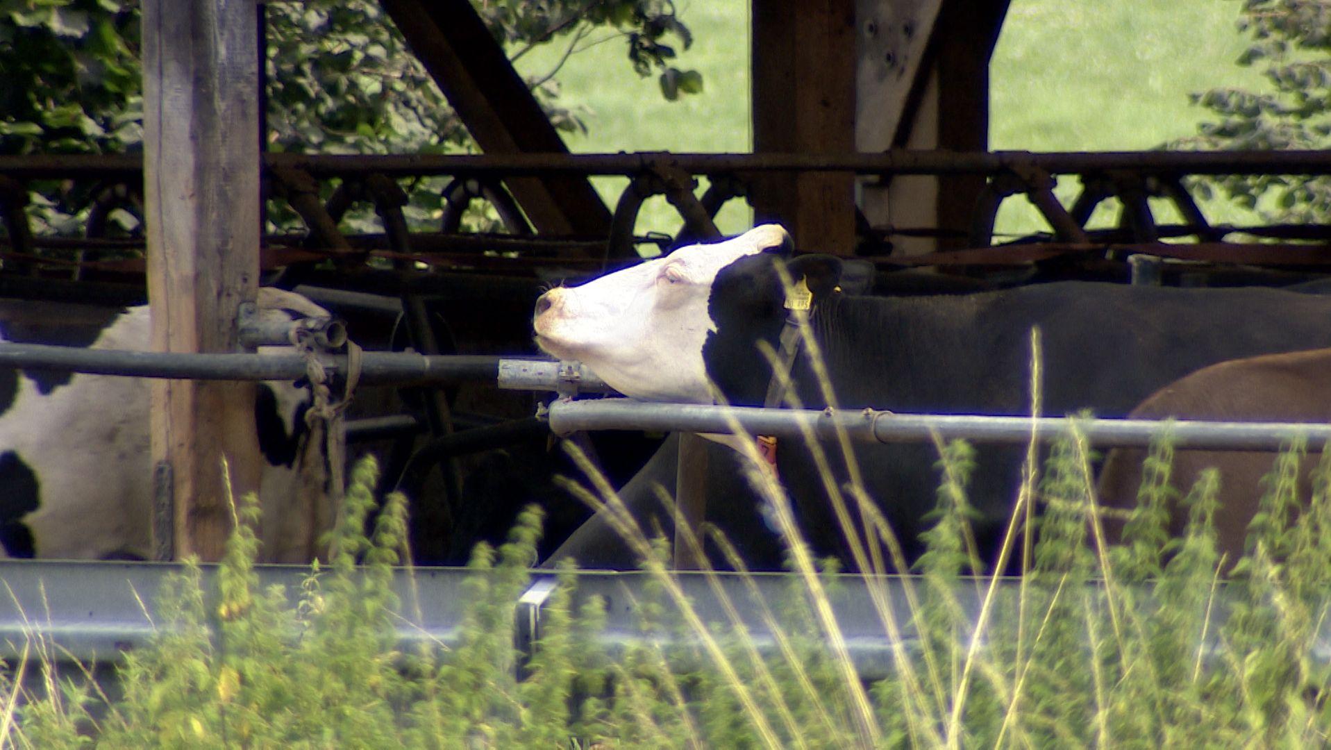 Die Polizei stellte Unterlagen bei der Durchsuchung eines zweiten Allgäuer Milchviehbetriebs in Bad Grönenbach sicher.