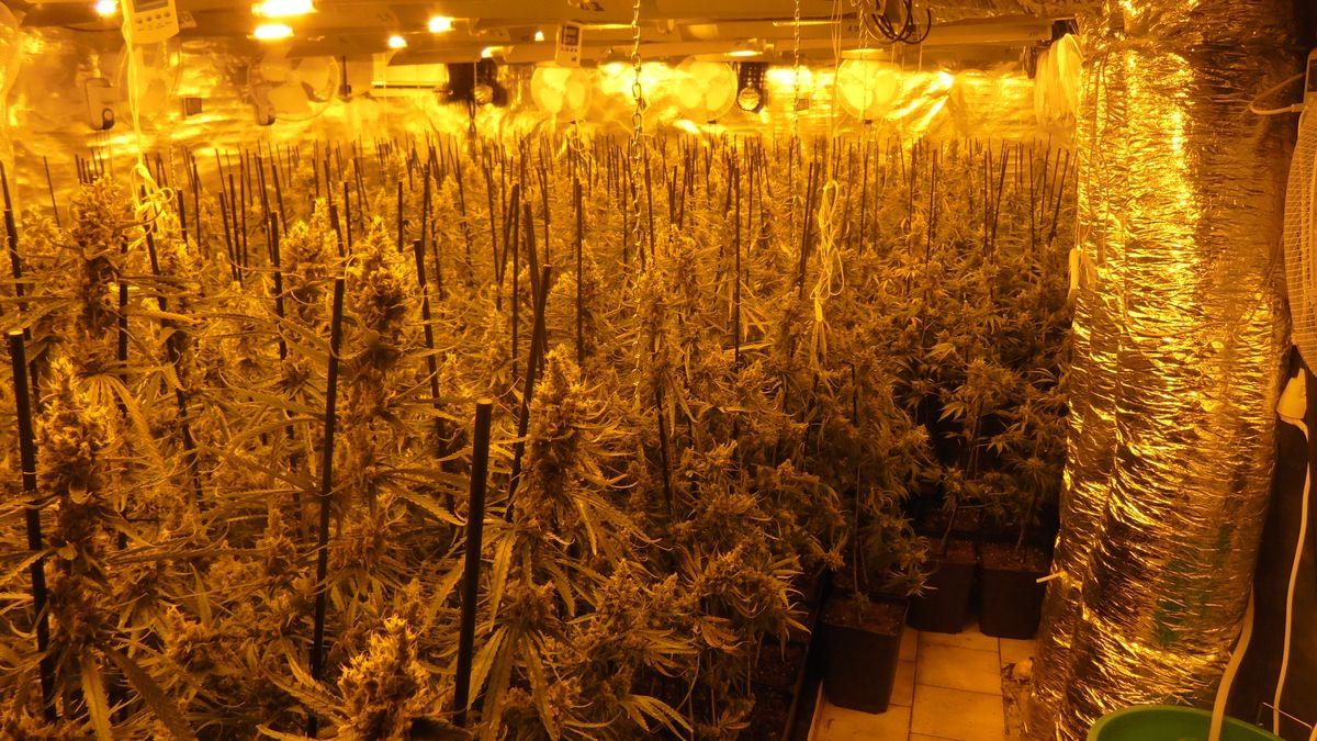 Aufzuchtanlage mit zahlreichen Marihuana-Pflanzen und Equipment im Wert von mehreren Tausend Euro