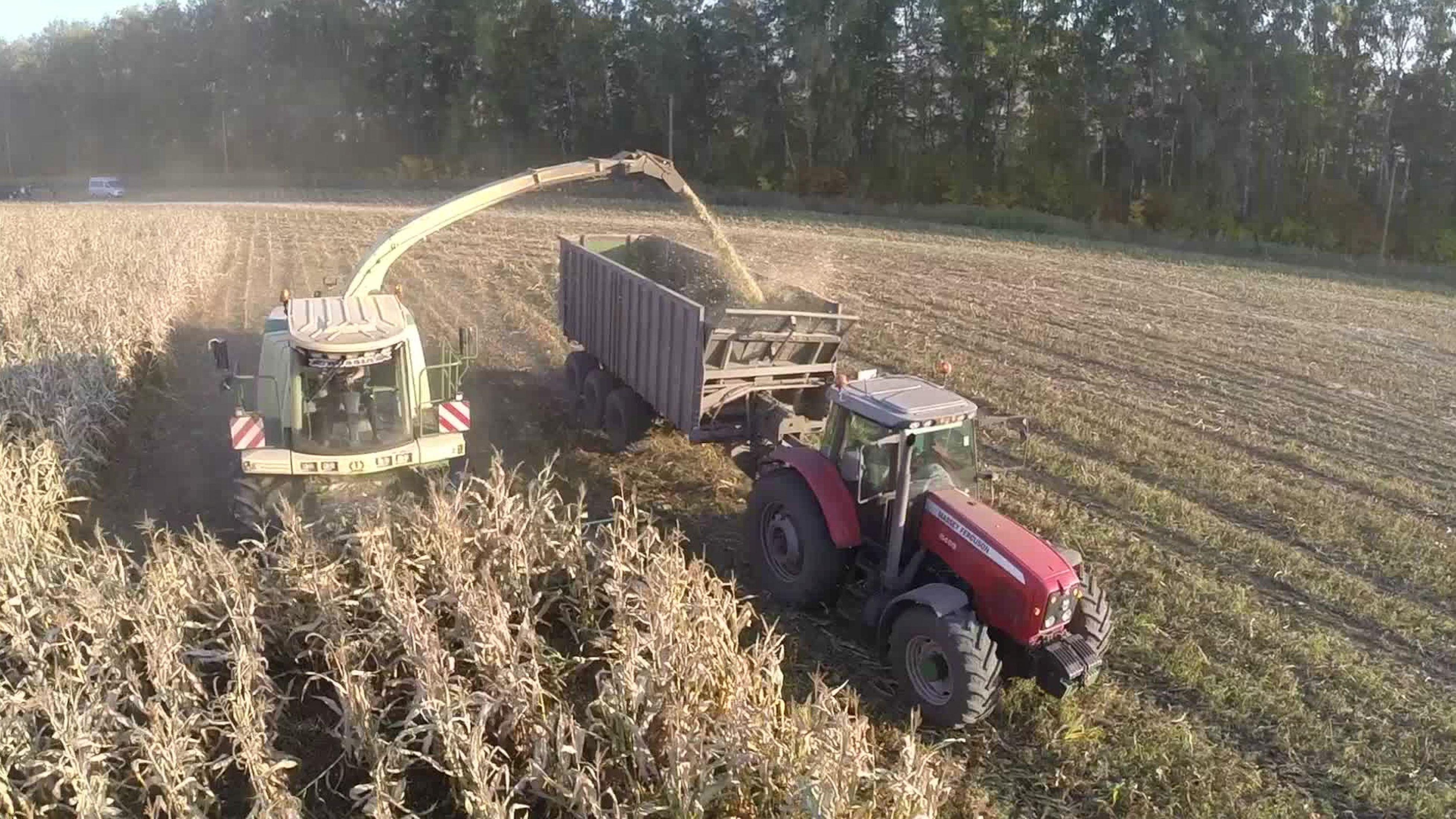 Symbolbild: ein Maisfeld wird abgeerntet