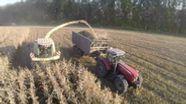 Symbolbild: ein Maisfeld wird abgeerntet   Bild:colourbox