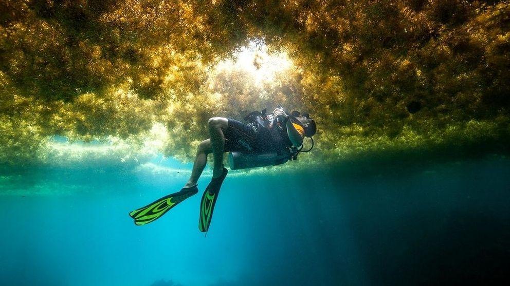 Ein Taucher schwimmt in einer Schicht von Algen.