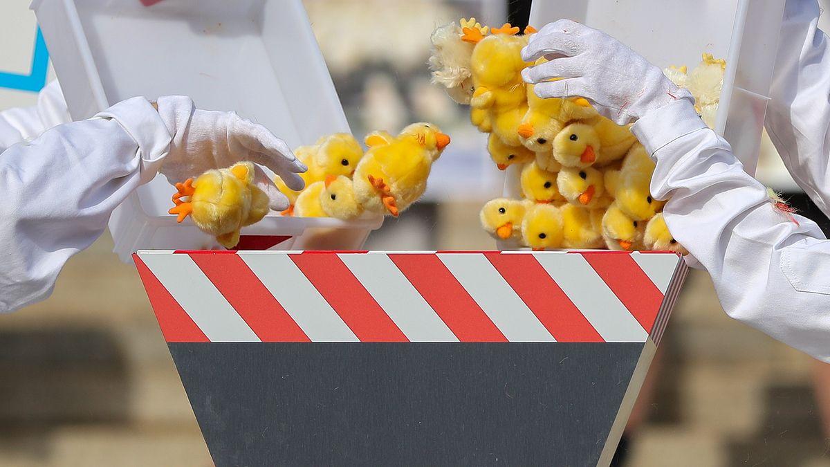 Aktivisten der Albert Schweitzer Stiftung und der Tierschutzorganisation PETA protestieren vor der Urteilsverkündung mit einer symbolischen Aktion zum Kükenschreddern vor dem Bundesverwaltungsgericht.