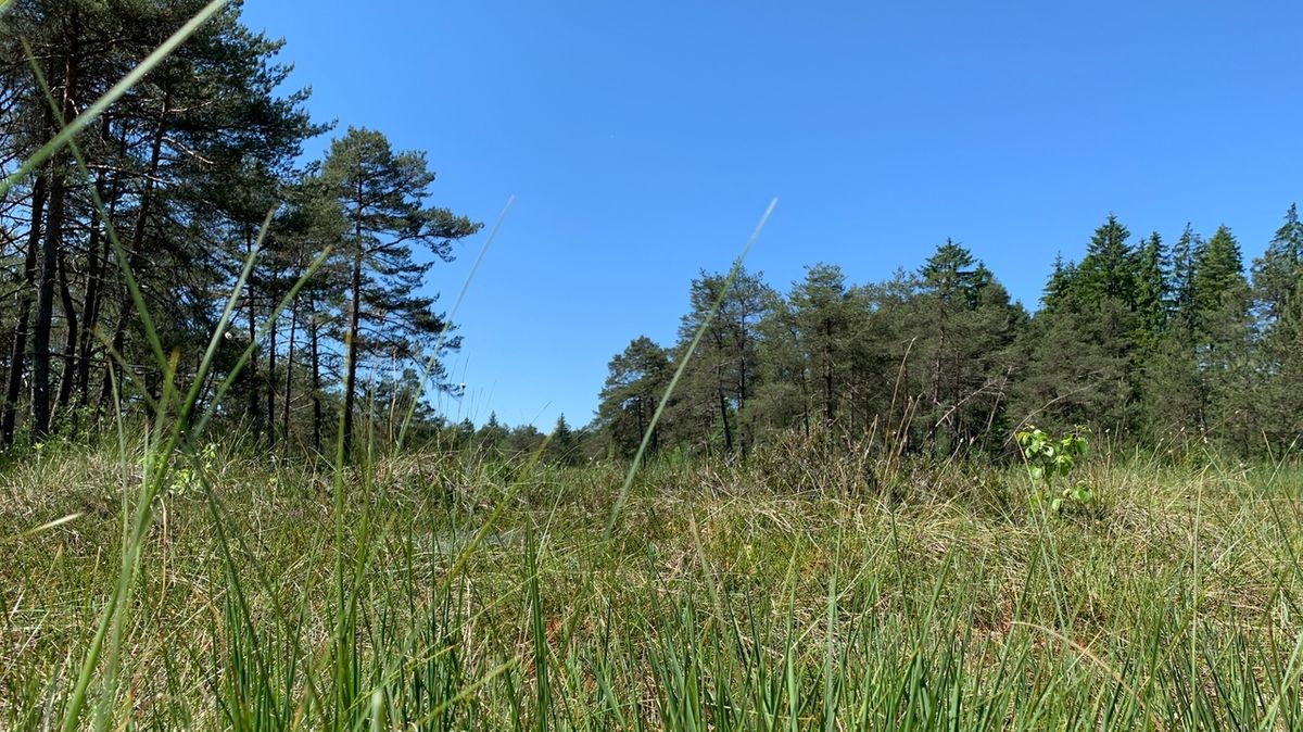 Das Naturschutzgebiet Degermoos wird renaturiert