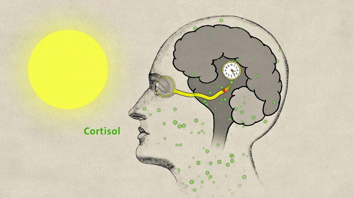 Gezeichneter Kopf mit sichtbarem Gehirn, wo eine kleine Uhr drin ist.