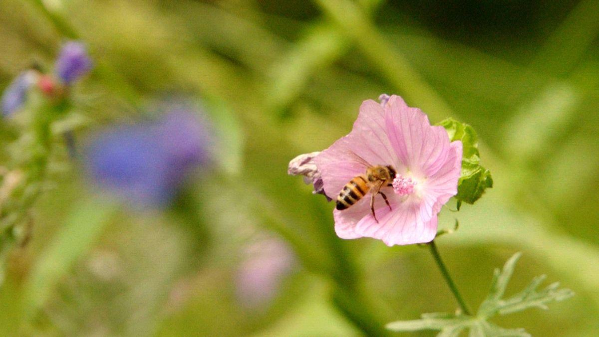 Der heute veröffentlichte globale Bericht zur Lage der biologischen Vielfalt fällt ernüchternd aus.
