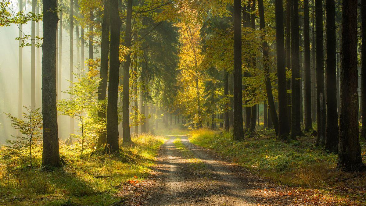 Forstweg im Spessart