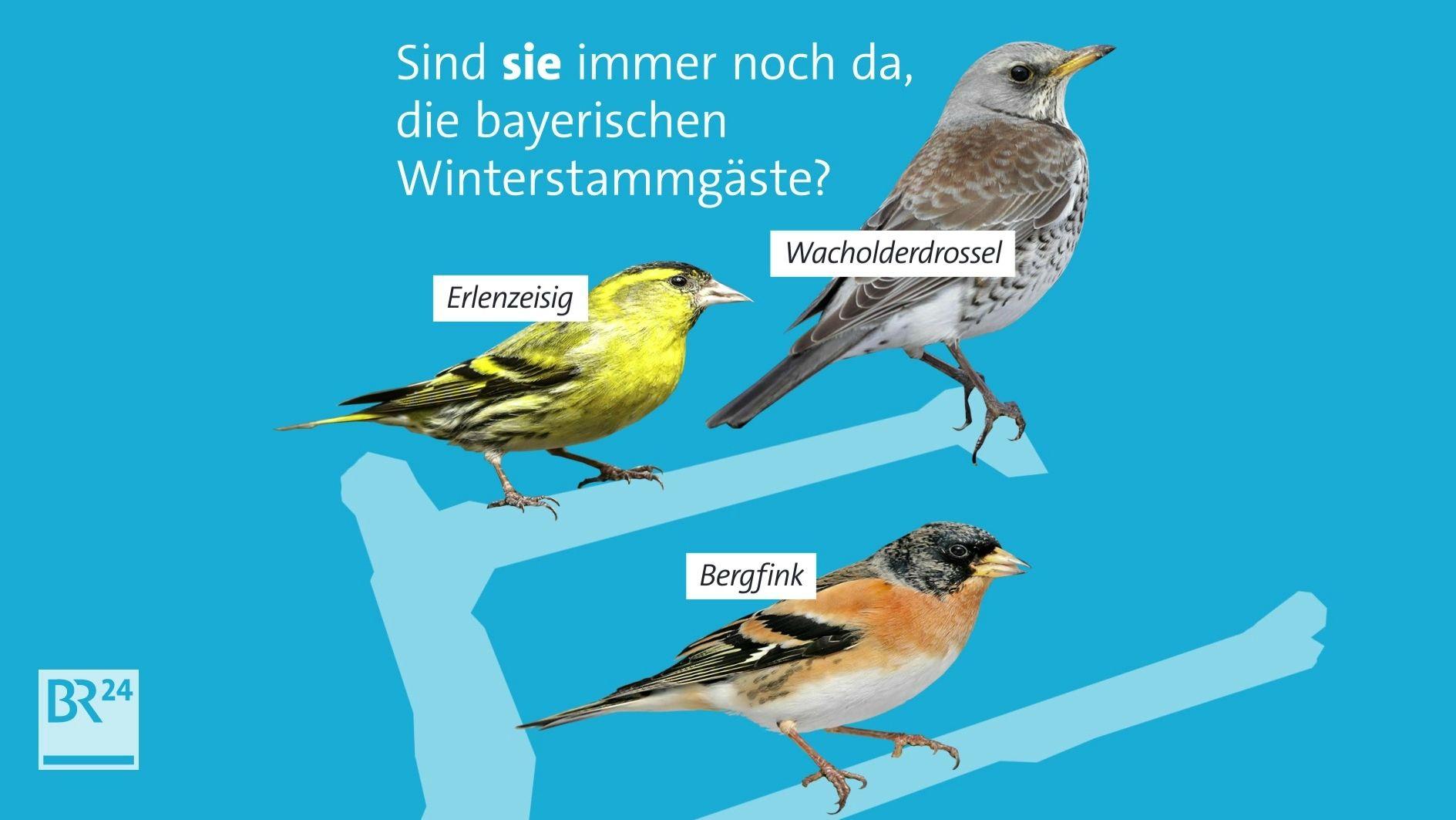 Grafik Wintervögel