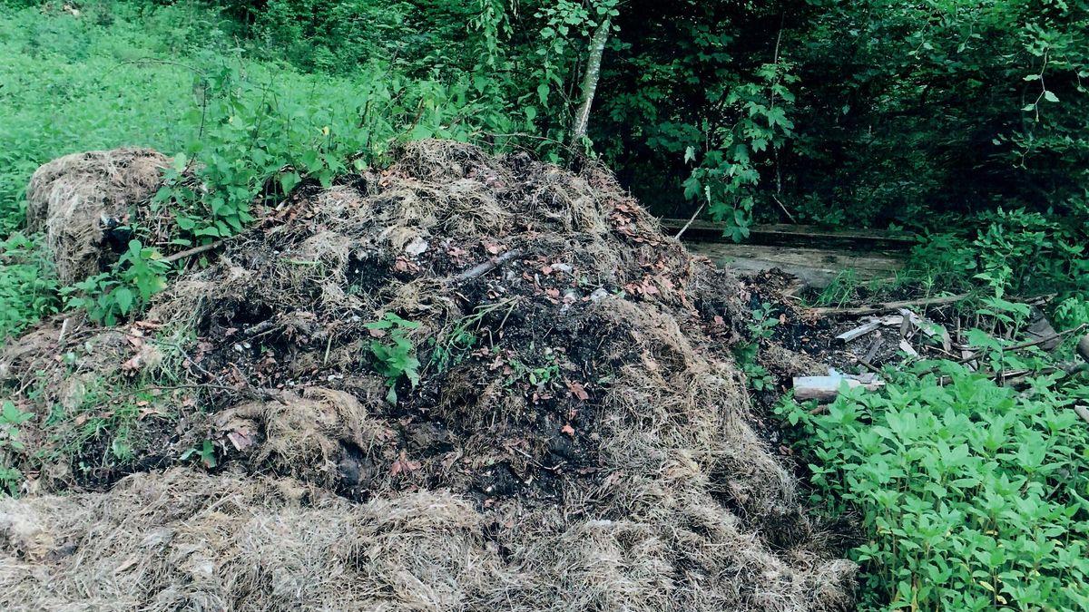 Im Wald entsorgter Abfall.