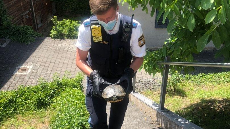 Ein Polizeibeamter trägt die gerettete Gelbwangenschildkröte.