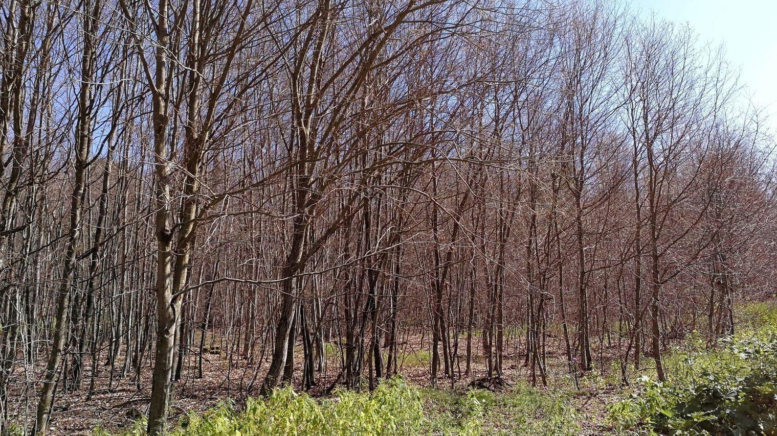 Geschädigter Wald bei Hettstadt in Unterfranken