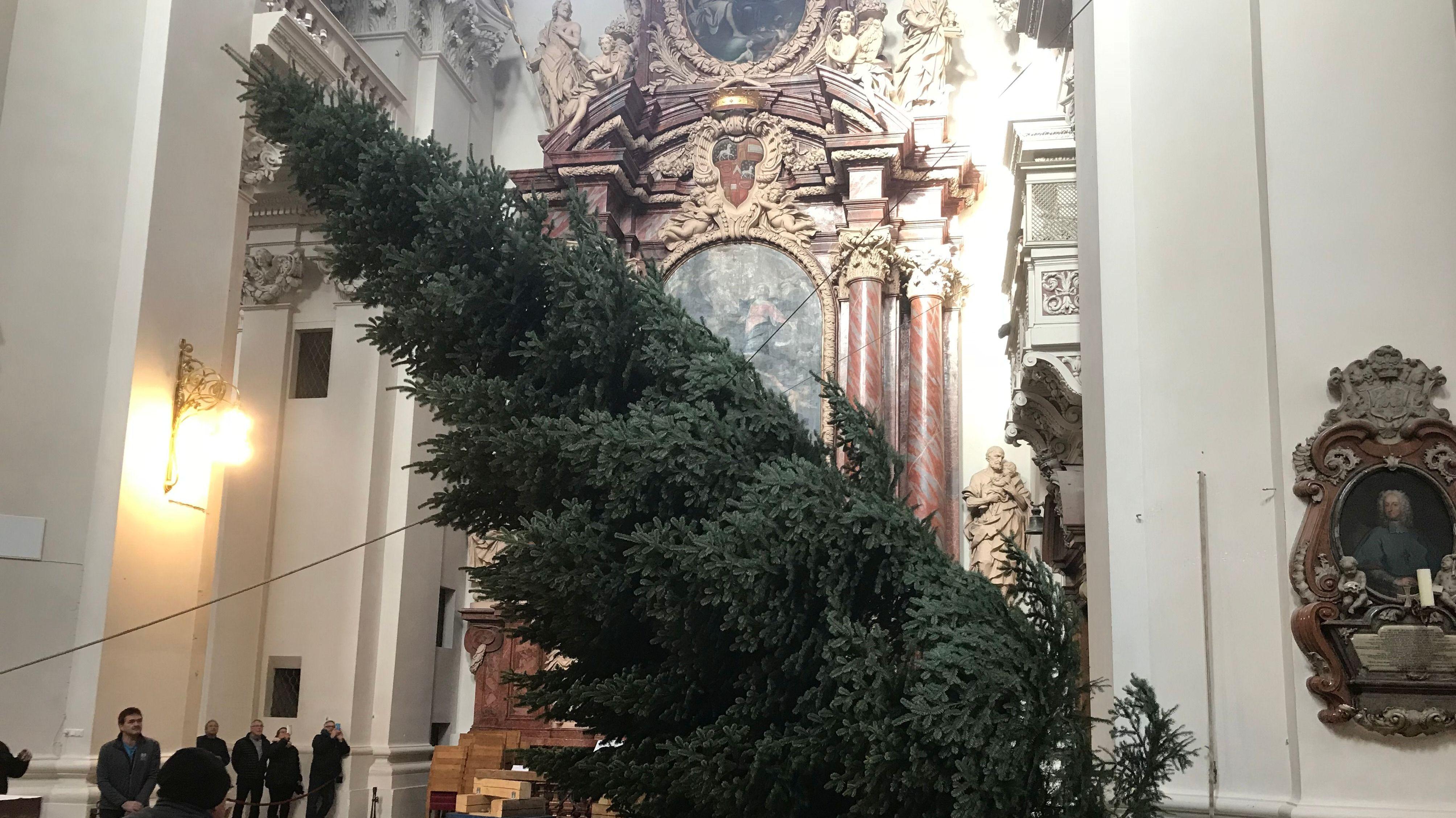 Mit Seilen wird der Christbaum im Passauer Dom hochgezogen