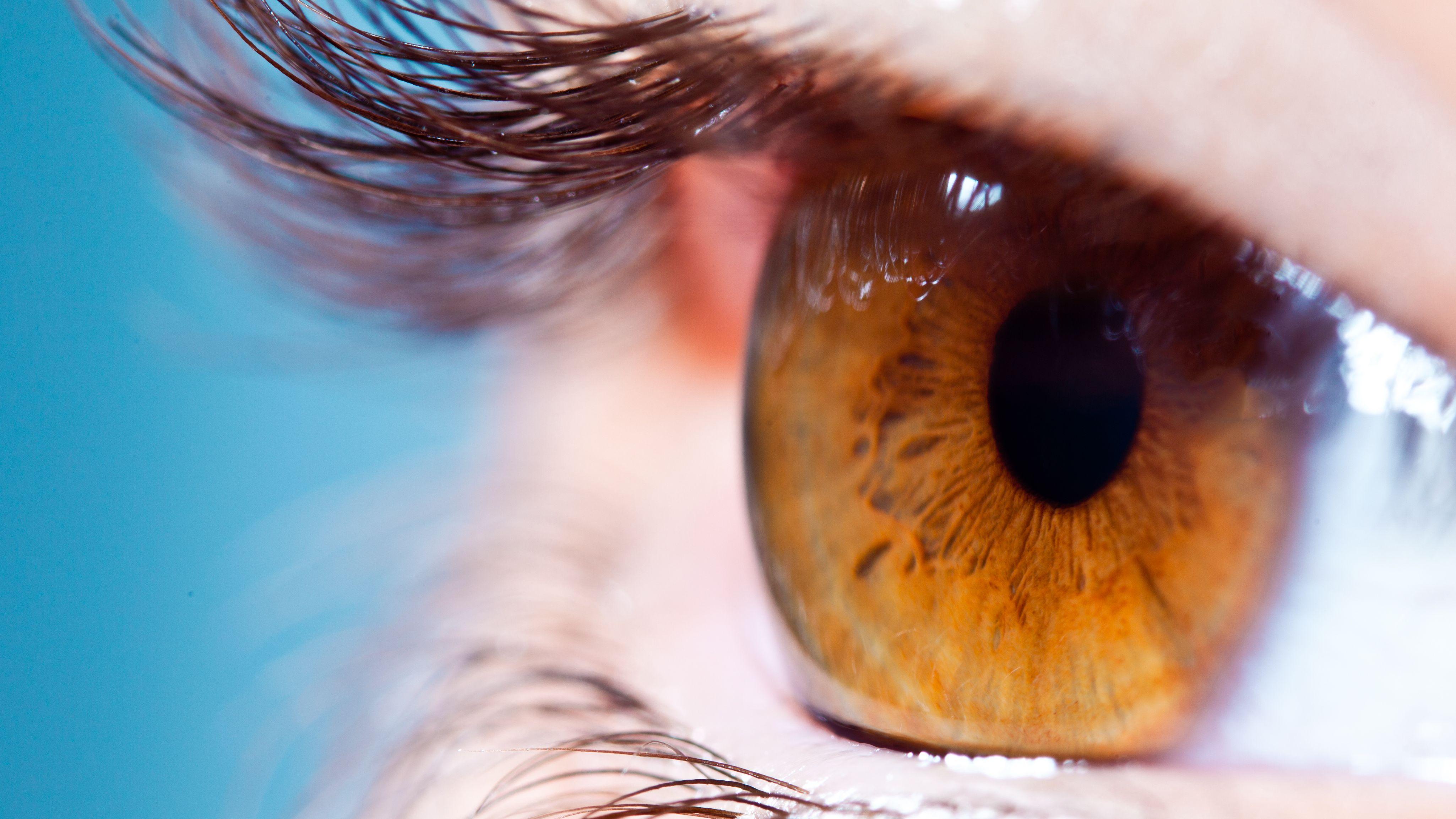 Braunes Auge in der Nahaufnahme