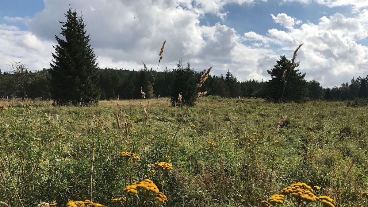 Eine der extensiv genutzten Wiesenflächen, von denen es im Nationalpark Sumava viele gibt. Sie werden unter anderem von Schafen abgeweidet.