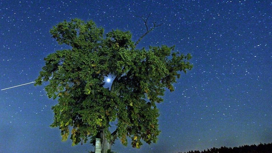 Sternenhimmel mit hellem Planeten hinter üppig grünem Baum