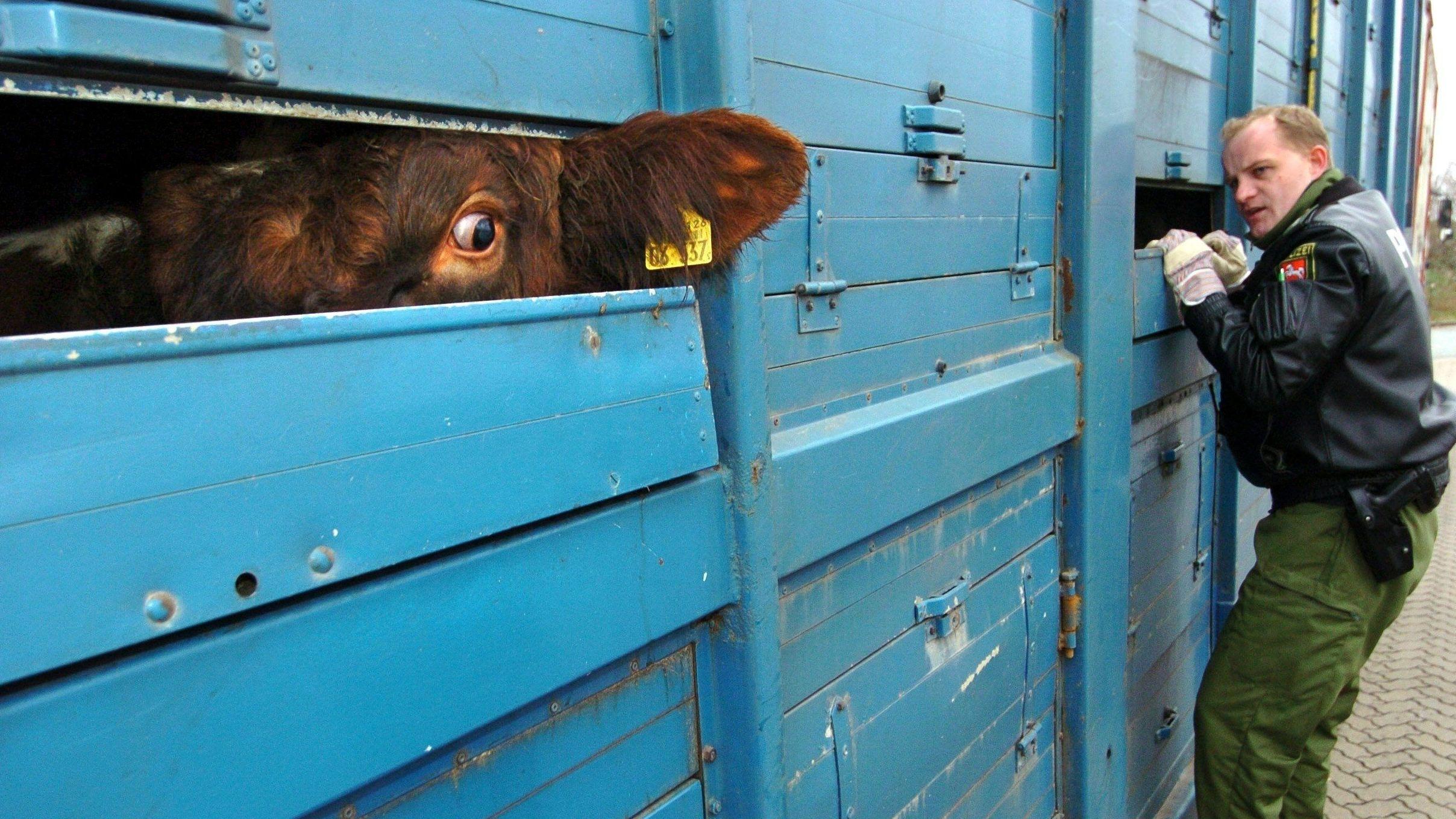 Kontrolle eines Tiertransports an einer Grenze.