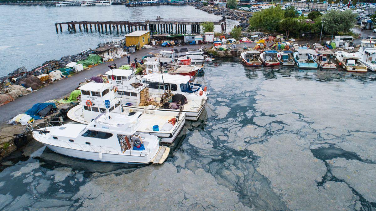 Schleimplage im Marmarameer