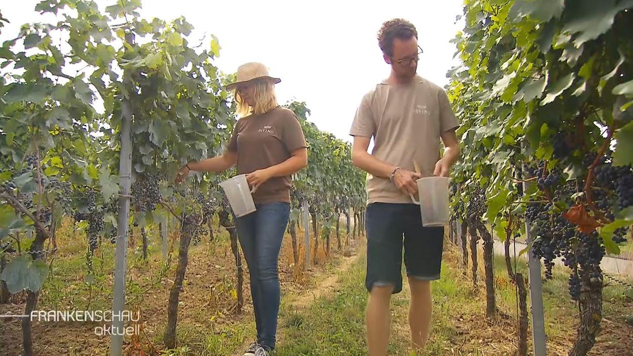 Ein Mann und eine Frau laufen durch einen Weinberg.