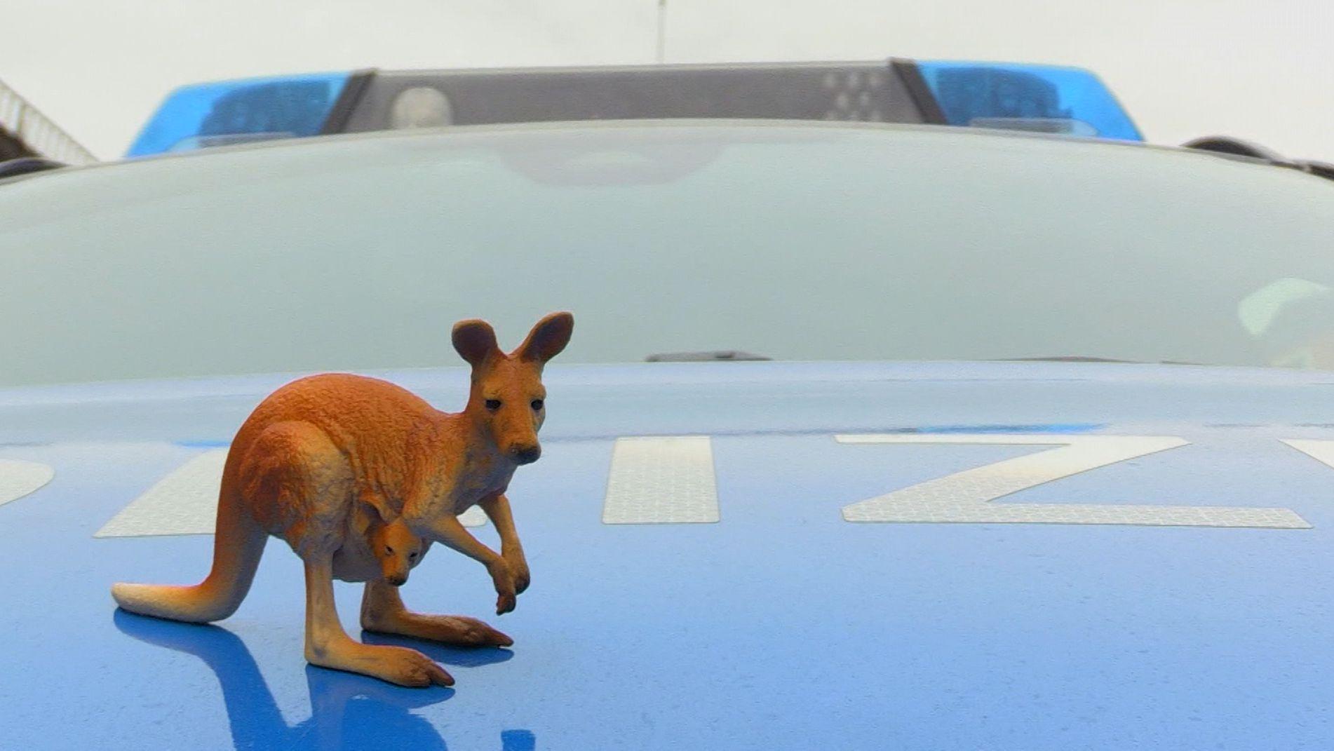 Spielzeugkänguru auf Polizeiauto