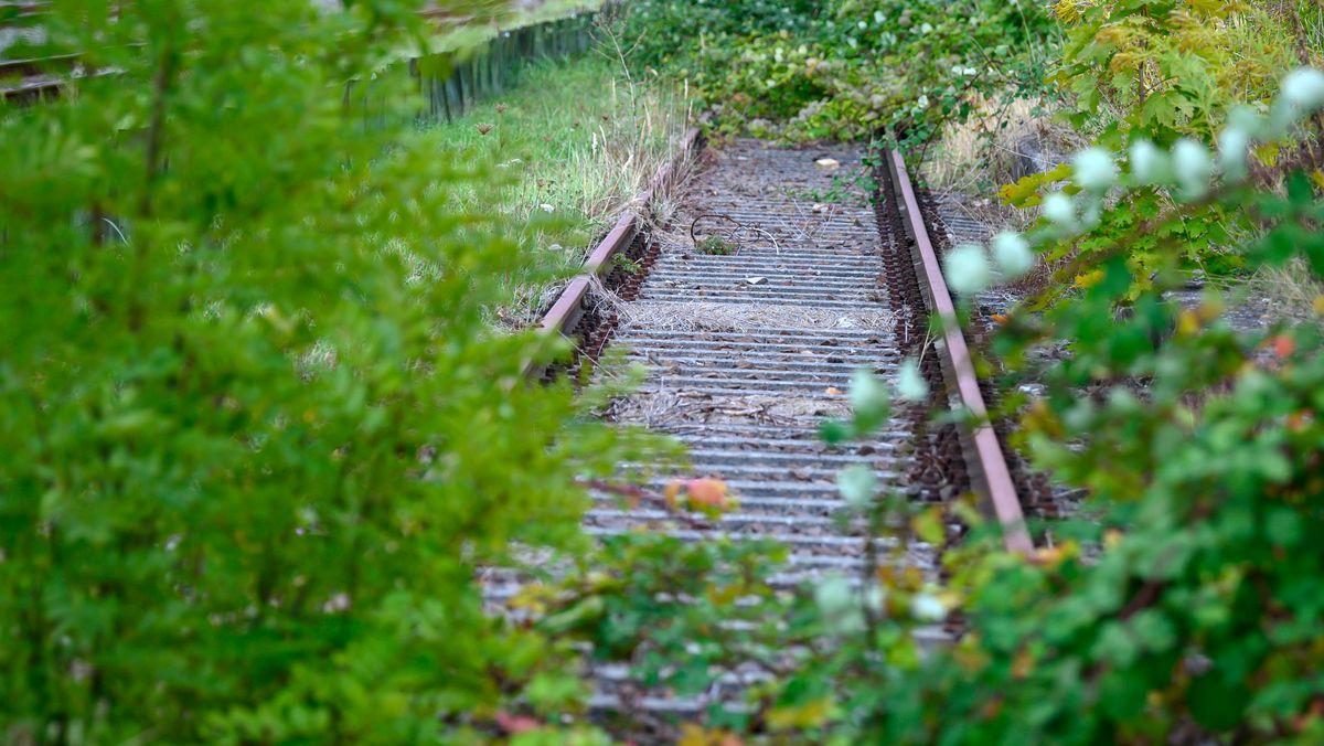 Üppige Vegetation wächst auf einer stillgelegten Bahnstrecke