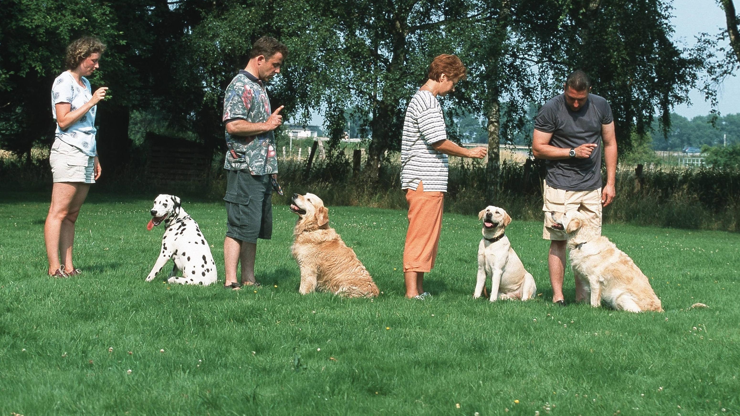 Hunde in der Hundeschule