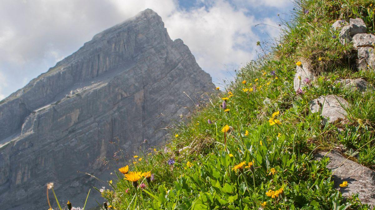 Bergblumenwiese mit Blick auf den kleinen Watzmann