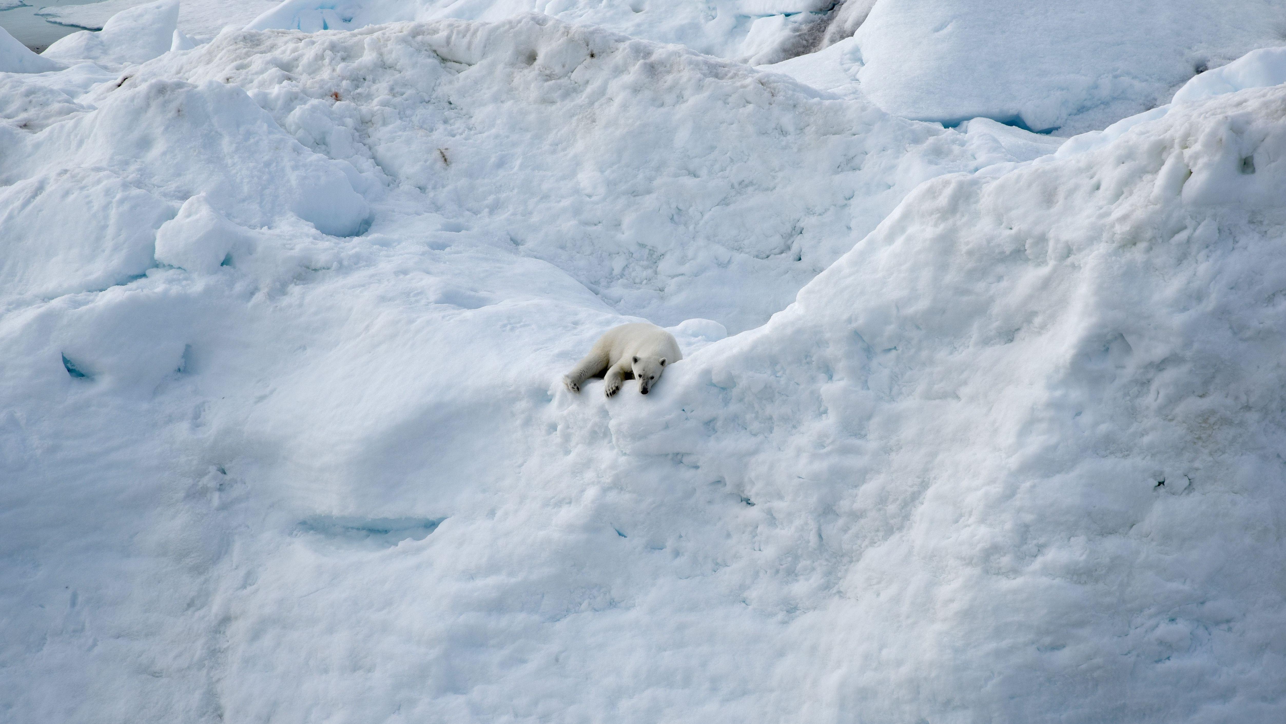 Noch liegt der Eisbär auf einem Eisberg. Wie schnell das Eis schmilzt und welche Folgen das für die Umwelt hat, zeigt der IPCC-Sonderbericht.