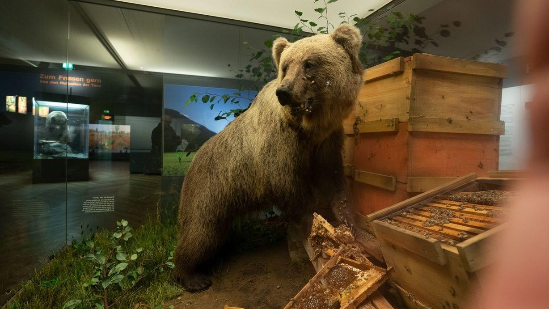 Bär Bruno im Museum Mensch und Natur