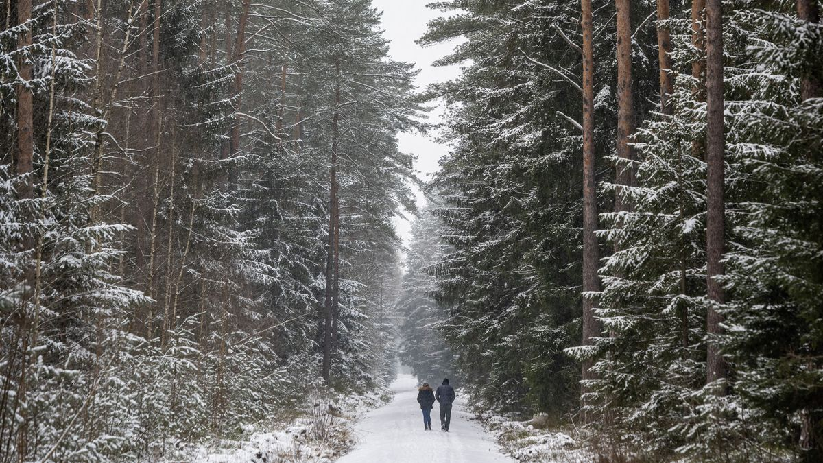 Verschneiter Wald in Bayern mit zwei Spaziergängern