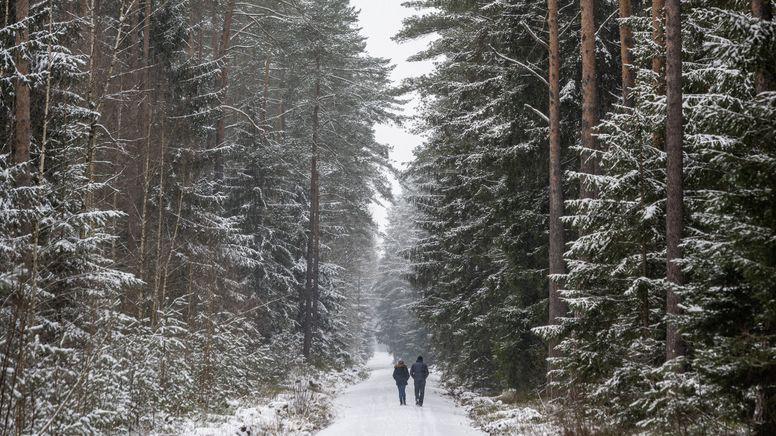 Verschneiter Wald in Bayern mit zwei Spaziergängern | Bild:pa/dpa/Armin Weigel