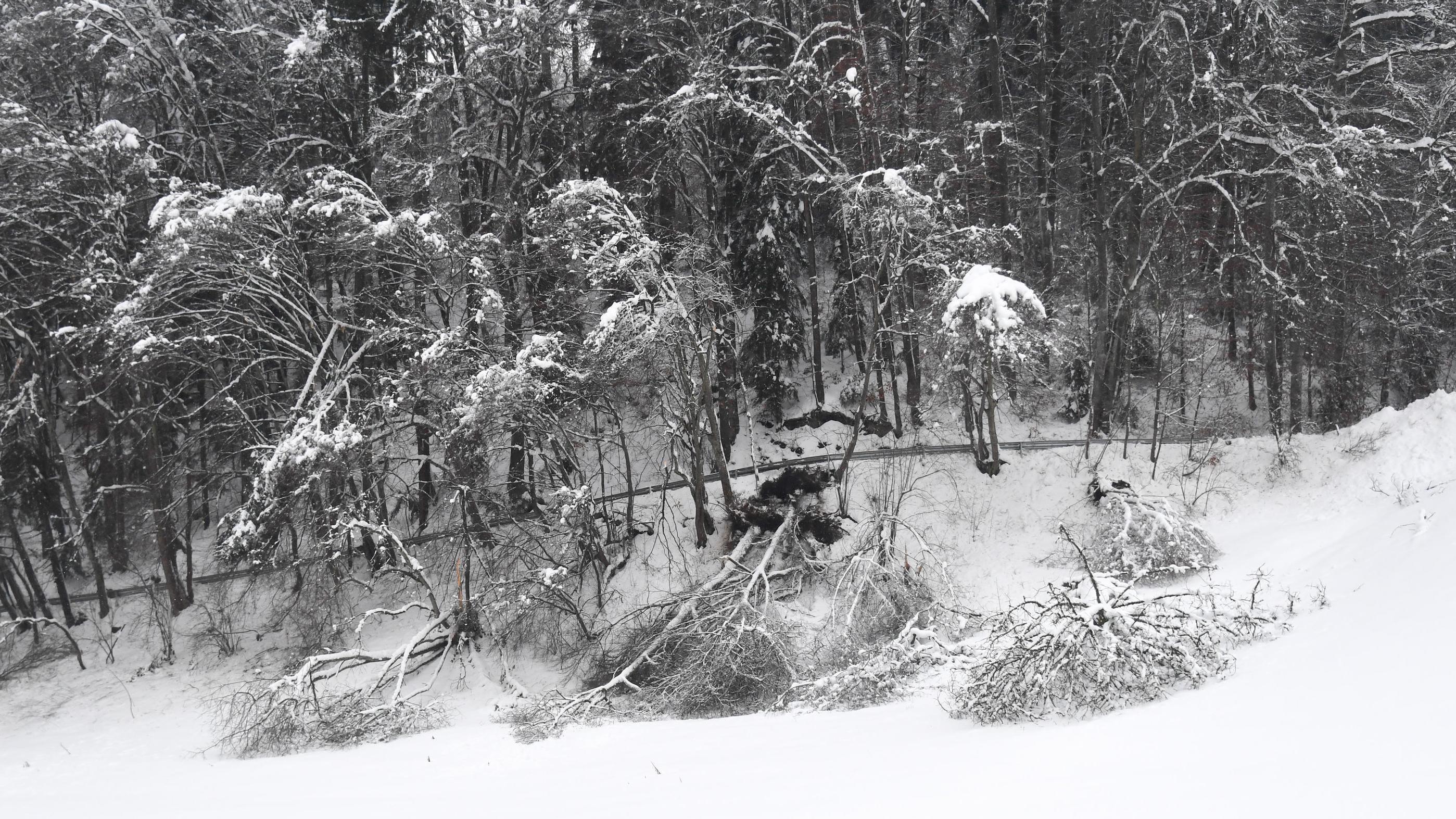 Umgestürzte Bäume in einem Wald bei Traunstein