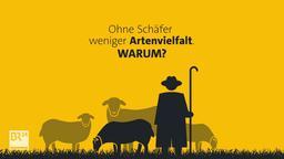 Ohne Schäfer weniger Artenvielfalt. Warum? | Bild:BR