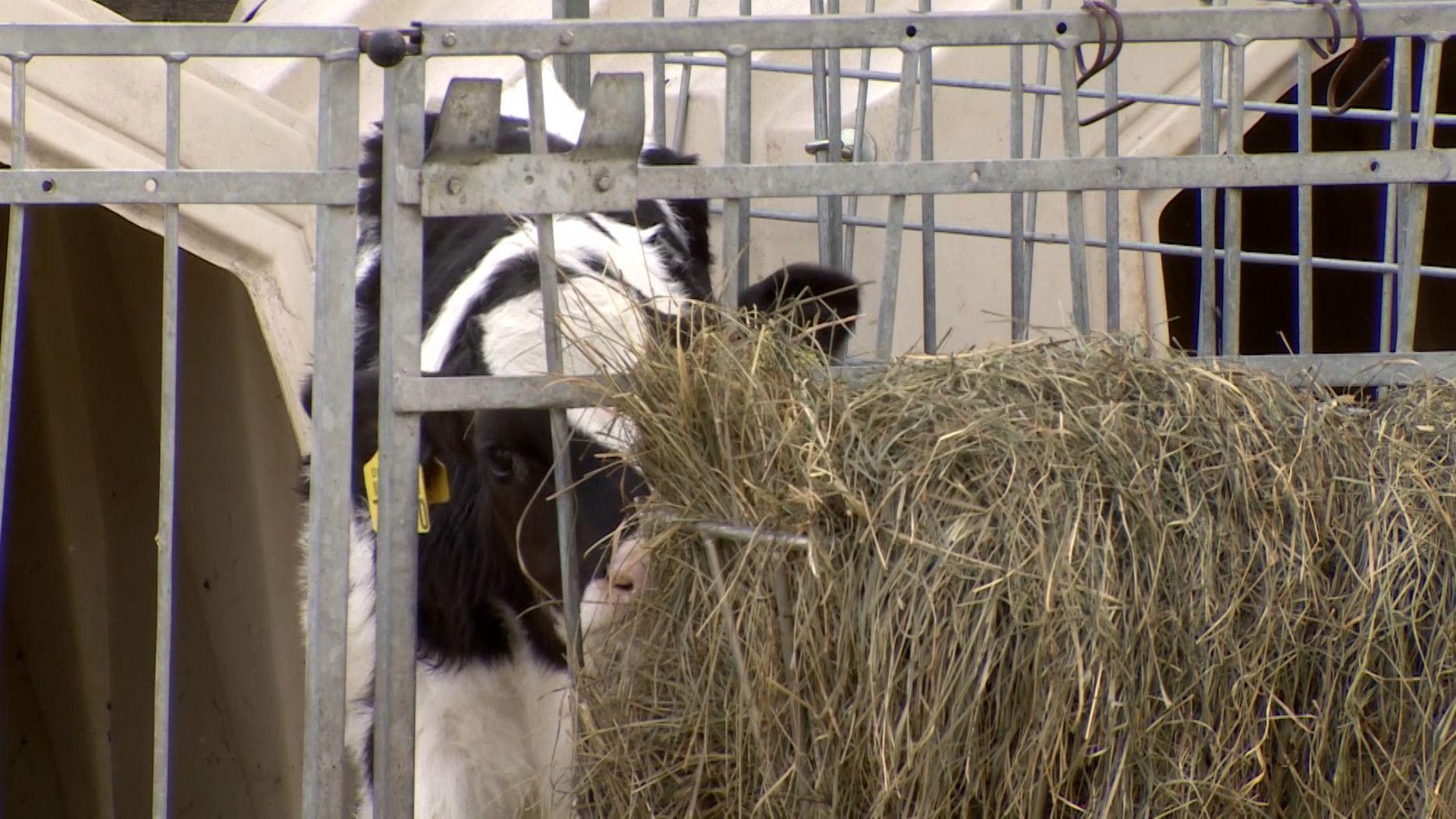 Allgäuer Tierskandal: Erster Landwirt gesteht Fehler ein