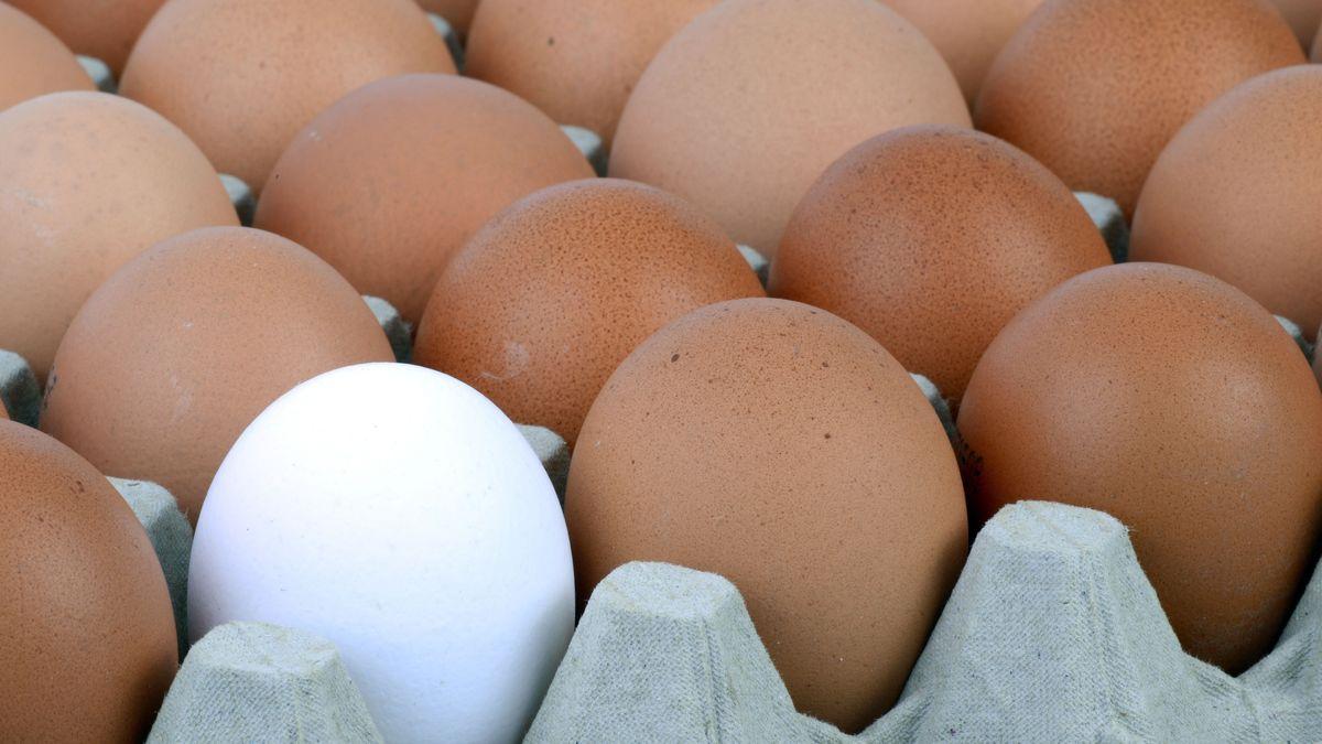 Eier auf einer Palette (Symbolbild)