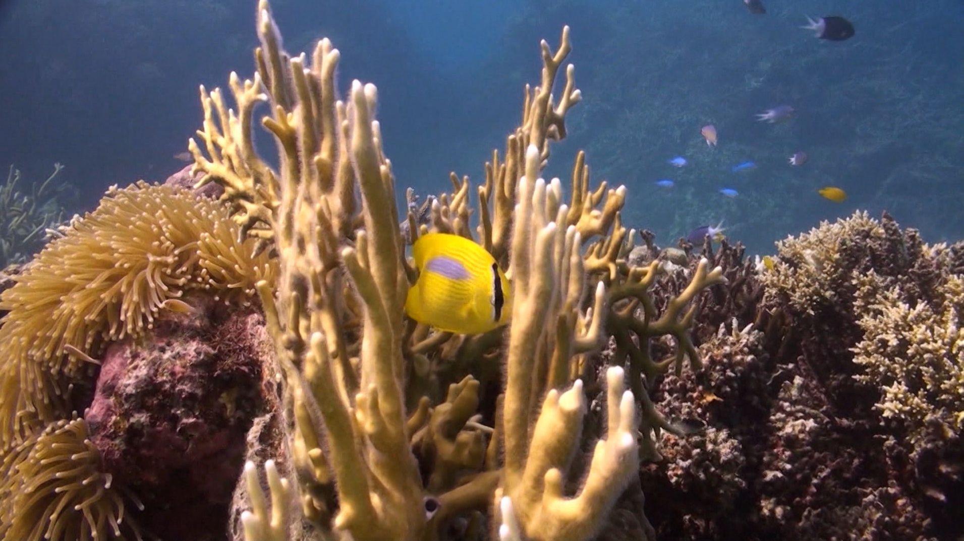 Artensterben im Meer
