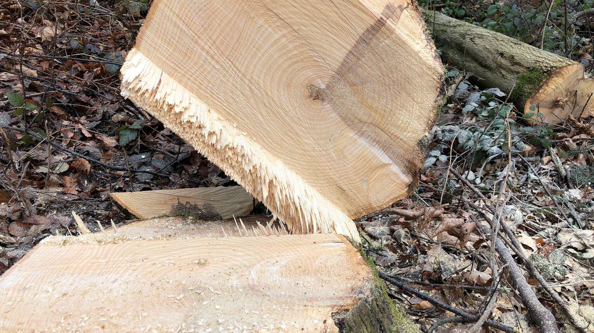 Der Pilzbefall ist im Holz oft deutlich erkennbar.