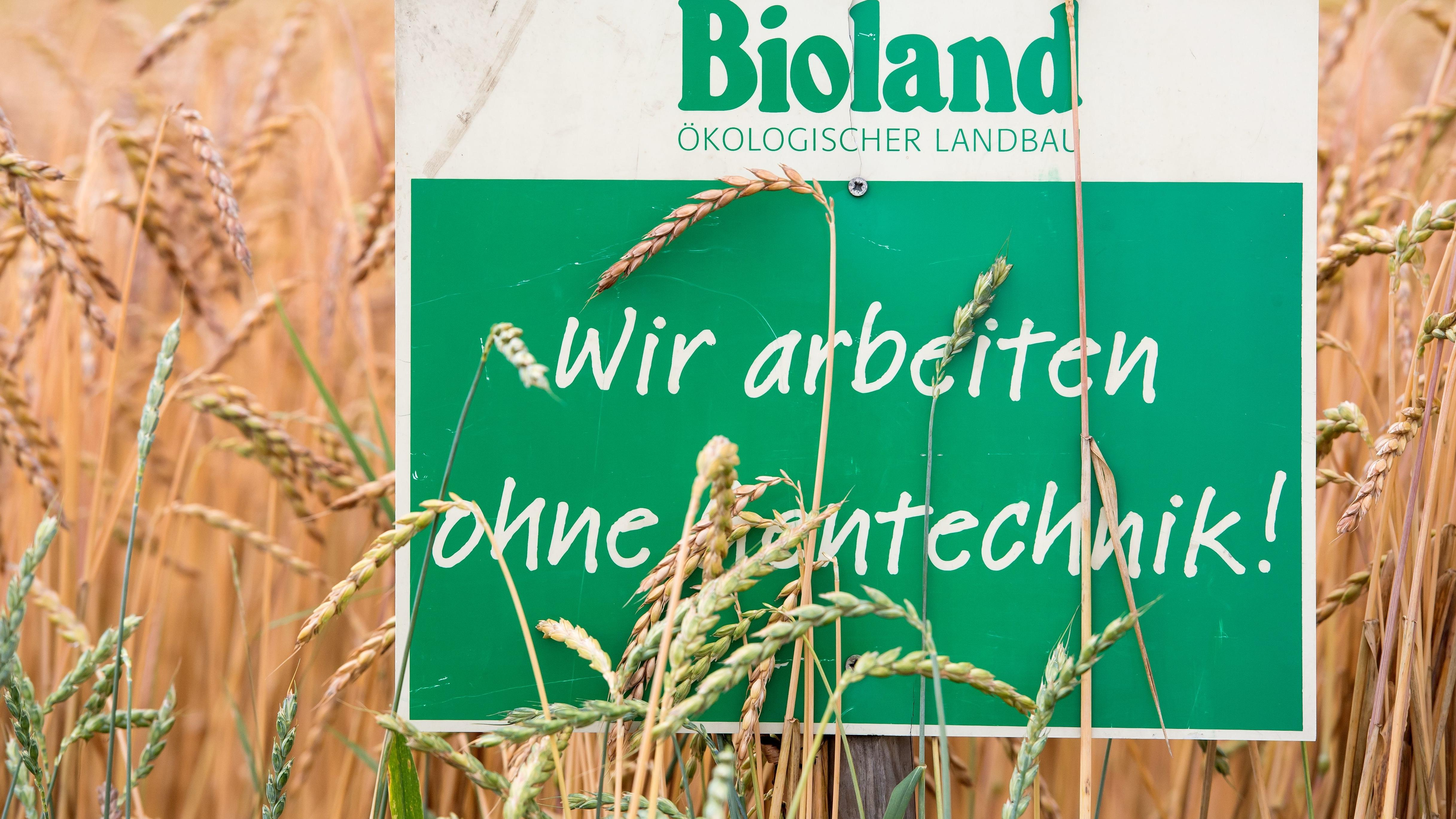 """Biolandwirtschaft: Dinkelfeld mit Schild mit der Aufschrift """"Bioland - Wir arbeiten ohne Gentechnik""""."""