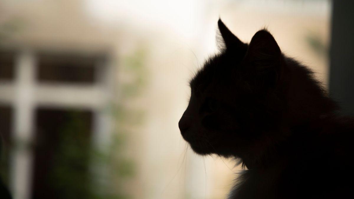 Eine Katze schaut aus einem Fenster.