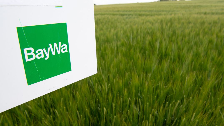Das Logo des Mischkonzern Baywa auf einem Schild, das in einem Feld mit Sommergetreide steht.