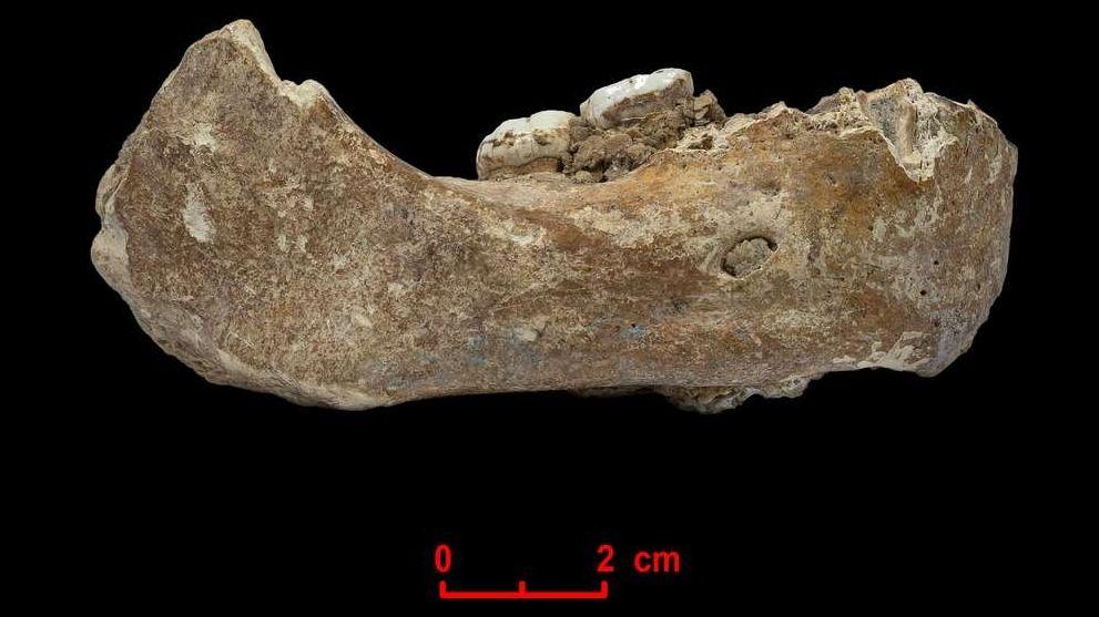 Der Xiahe-Unterkiefer eines Denisova-Menschen, von dem nur die rechte Hälfte erhalten ist, wurde 1980 in der Baishiya Karst Höhle gefunden.