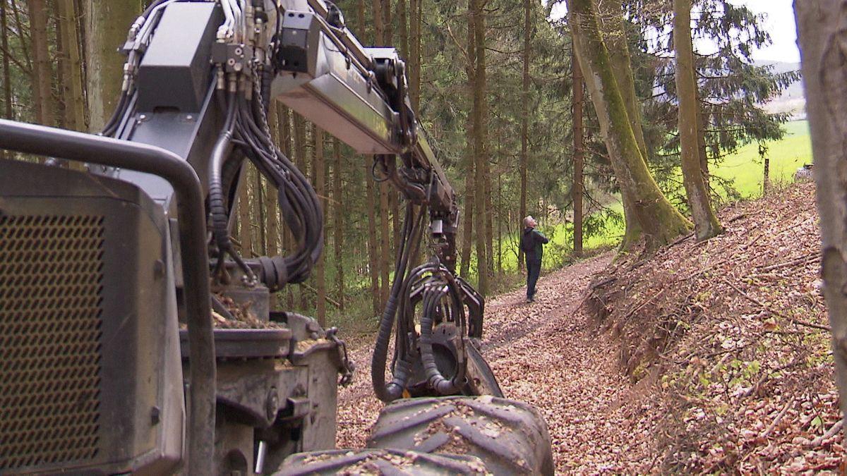 Harvester steht im Wald.
