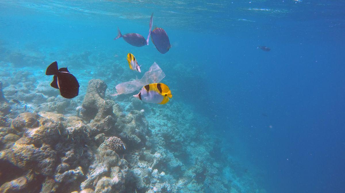 Plastik schwimmt im Meer. Seit Jahrzehnten sammelt es sich auch in den Tiefseegräben.